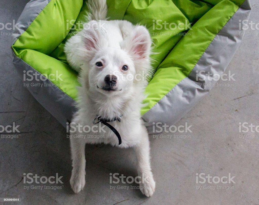 Sevimli köpek stok fotoğrafı