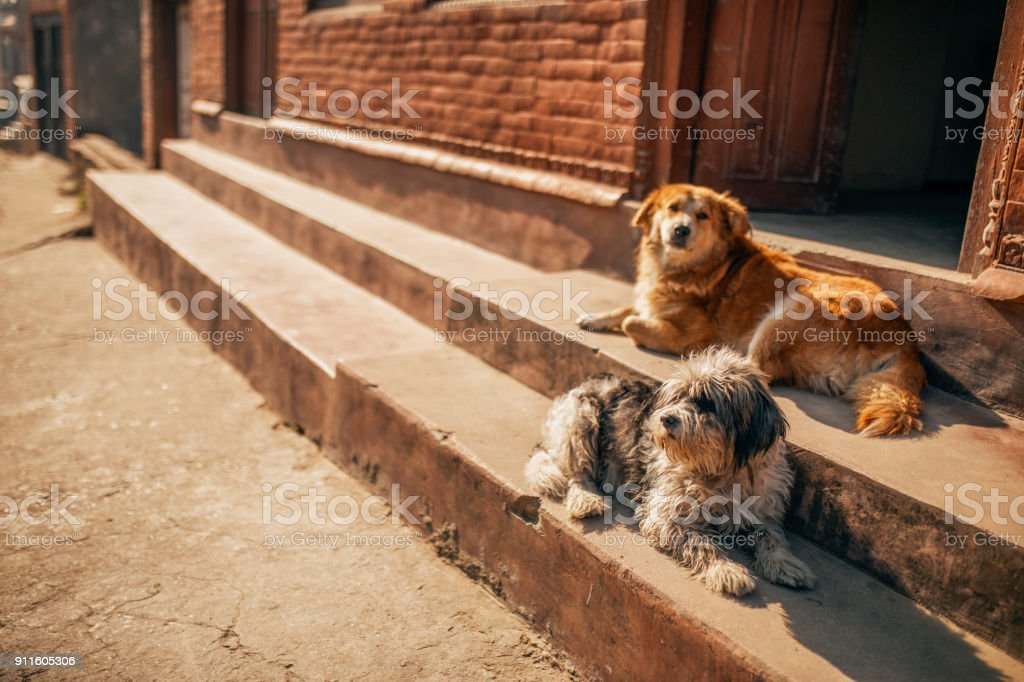 Cute dogs relaxing on steps. stock photo