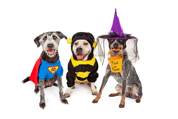 Adorable chiens avec des Costumes d'Halloween - Photo