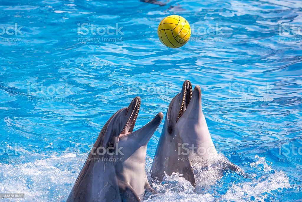 cute dolphins during a speech at the dolphinarium, Batumi, Geo stock photo