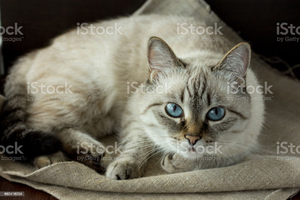 Cute domestic cat lying stock photo