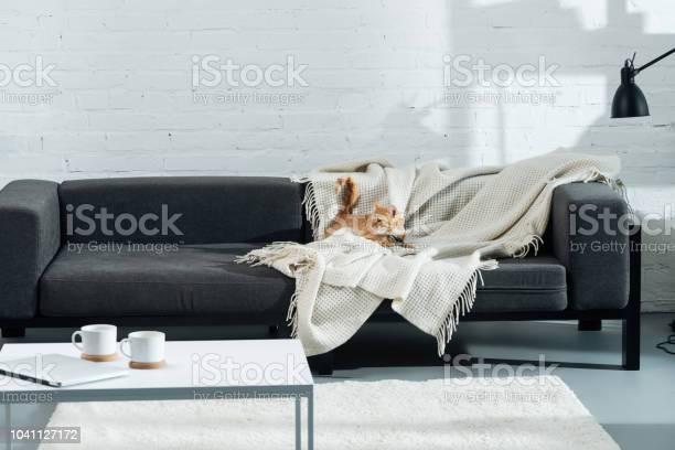 Cute domestic ginger cat lying on sofa in living room picture id1041127172?b=1&k=6&m=1041127172&s=612x612&h=0 rrva7iqayzldtfftoiw7rsawojli4wdcv0v3zxaza=