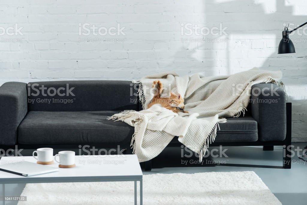 süße Hauskatze Ingwer auf Sofa im Wohnzimmer – Foto