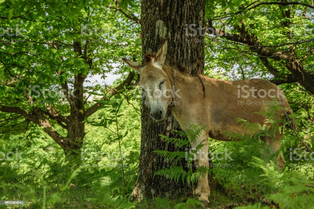 Cute donkey in the fresh forest zbiór zdjęć royalty-free