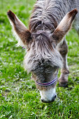 donkey, horse, mule, animal, cute, agriculture, small, mammal, meadow, farm, park, field, brown, pasture