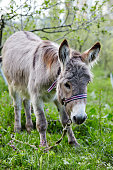 donkey, animal, portrait, livestock, pet, wild, travel, gray, grass, field, mule, smile, meadow, headstrong, standing, adorable
