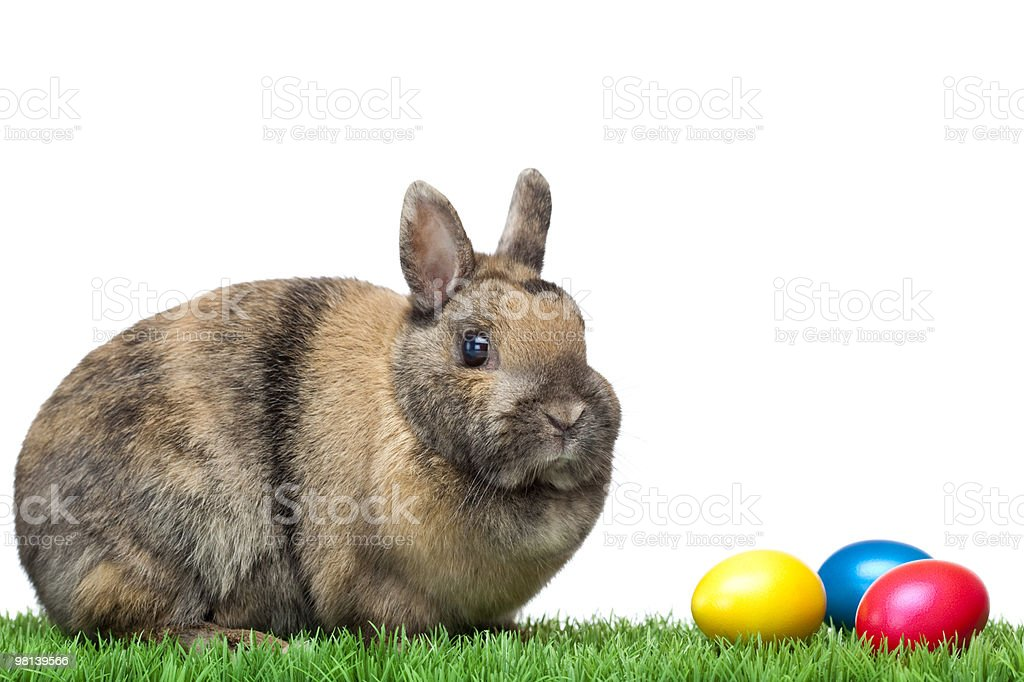 Cute Easter bunny sitting in green meadow with colorful eggs royalty-free stock photo