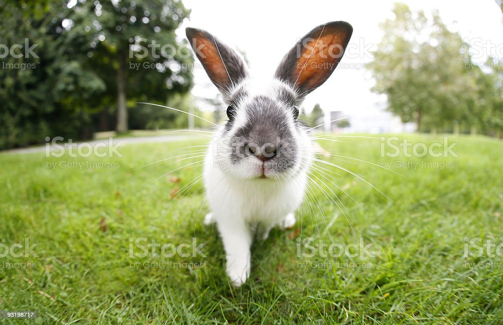 Cute Easter Bunny with Big Ears Outdoors stock photo