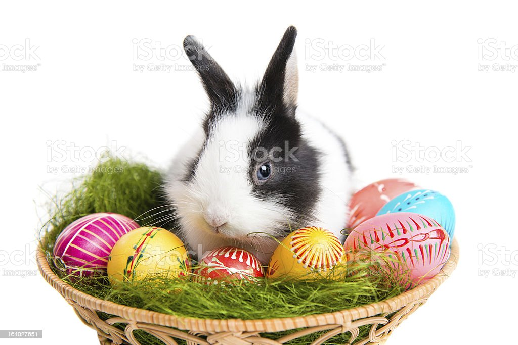 Cute Easter bunny with eggs in basket stock photo