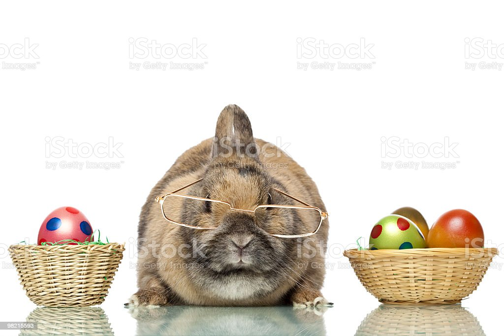 Cute Easter bunny with glasses sitting between colorful eggs royalty-free stock photo