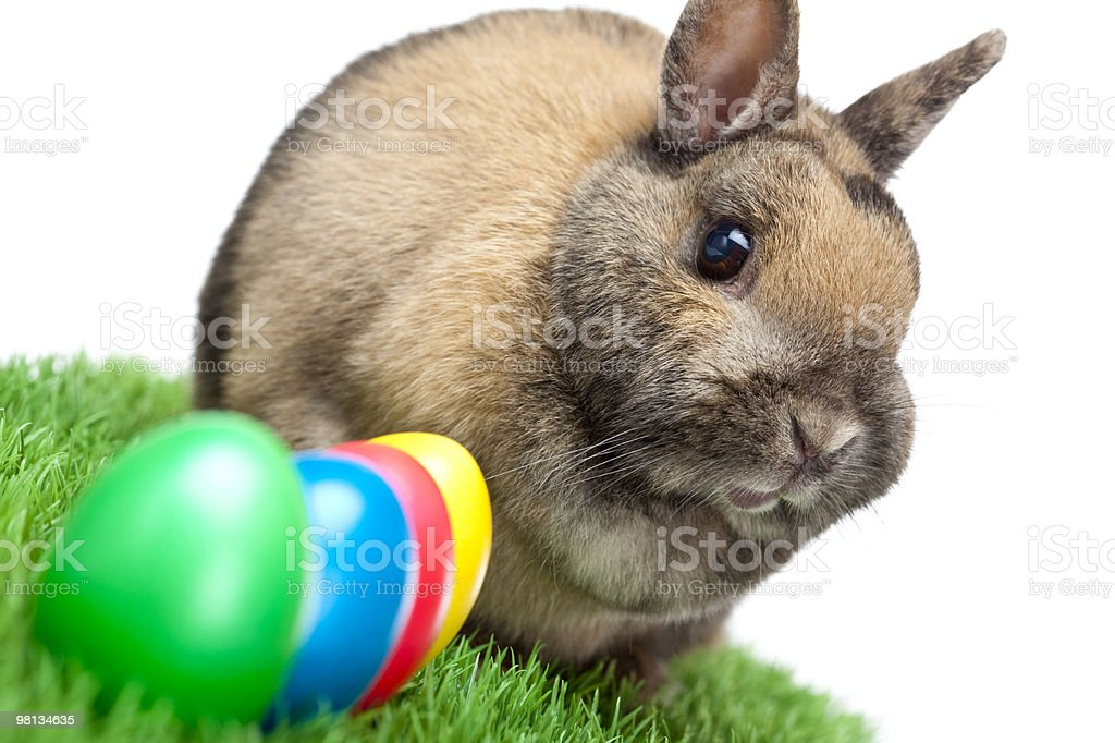 Cute Easter rabbit in spring meadow with colored eggs royalty-free stock photo