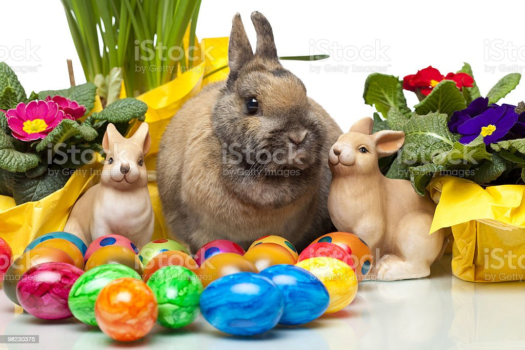 cute Easter Rabitt sitting among yellow daffodil, flowers, and eggs royalty-free stock photo