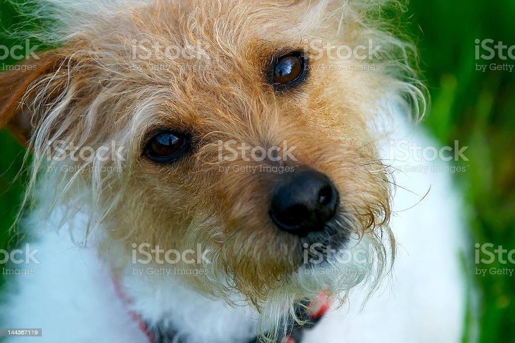 Cute Enough royalty-free stock photo