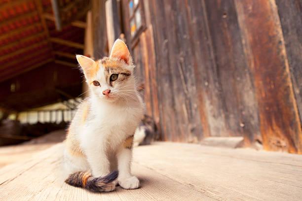 Cute farm kitten picture id186850893?b=1&k=6&m=186850893&s=612x612&w=0&h=pqkvzcdkepihi3zycfvhyuaeufjmpgfhm31aqzxe71o=