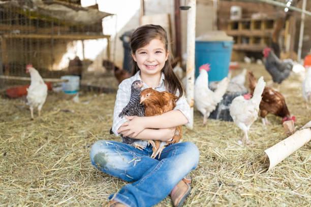 Criança do sexo feminino bonita abraçando galinhas na fazenda - foto de acervo