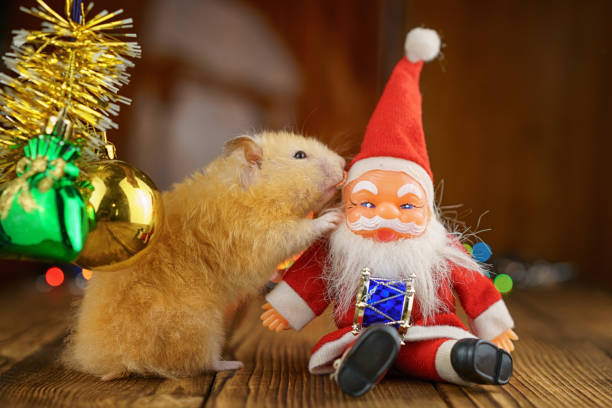 cute fluffy hamster and Santa Claus on wooden background bright bokeh festive atmosphere stock photo