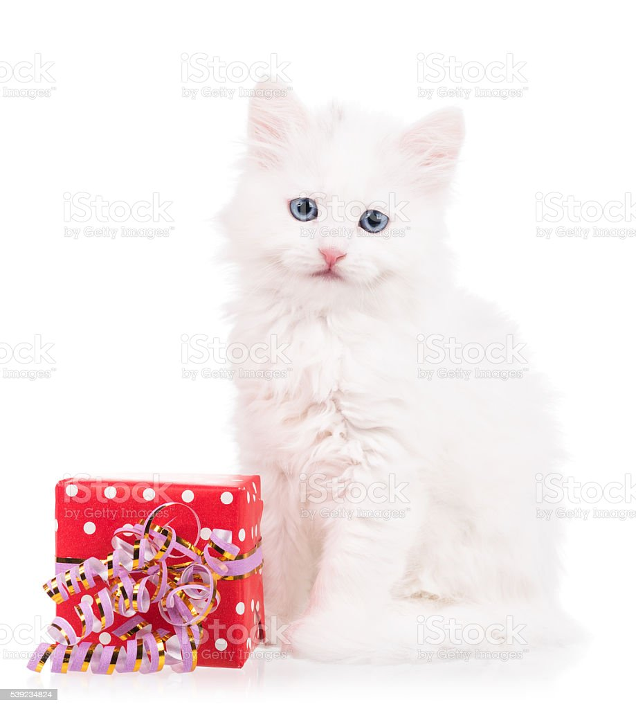 Cute fluffy kitten royalty-free stock photo