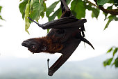 istock Cute flying fox hanging on the tree 1192673752
