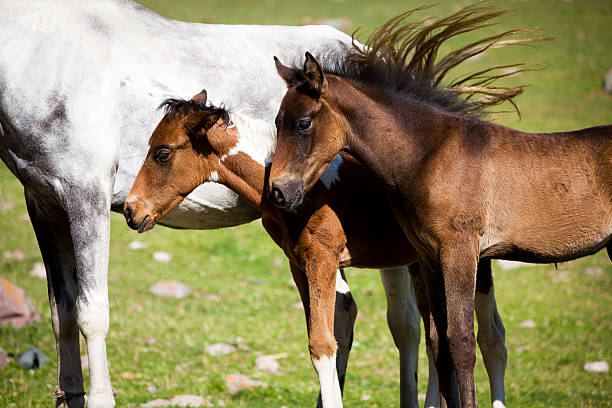Cute foals stock photo