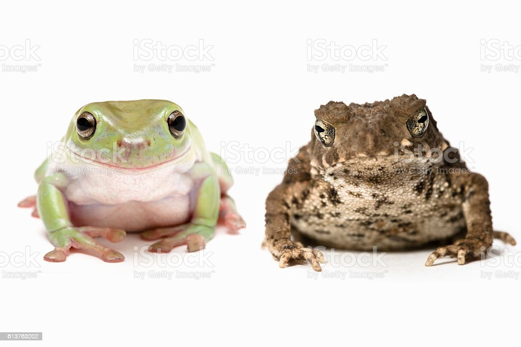Cute frog besides ugly toad stock photo