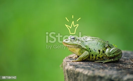istock Cute frog princess or prince. Toad painted crown, shooting outdoor 587184142