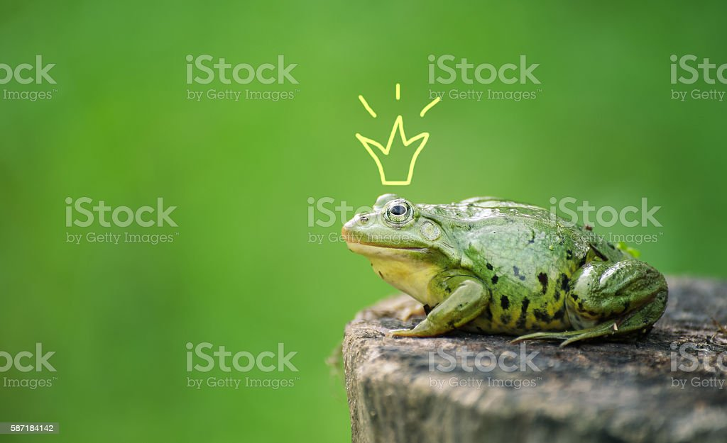 Cute frog princess or prince. Toad painted crown, shooting outdoor stock photo