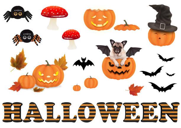 süße lustige halloween-elemente für die dekoration - hund spinnenkostüm stock-fotos und bilder