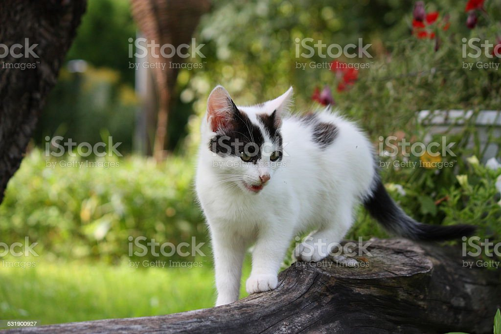 Cute funny kitten sitting near the flower bed stock photo