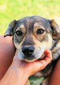 istock cute funny puppy put his head on the man's hand and looks friendly and scared 1041987124