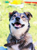 istock cute funny puppy with high snout looks up cheerfully 1041987164