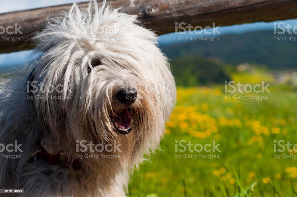 Cute fur ball stock photo