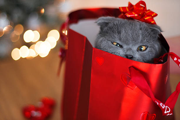 Cute Gift Gray kitten in a red bag with gift box, red hearts and with chocolate. kitten cute valentines day domestic cat stock pictures, royalty-free photos & images