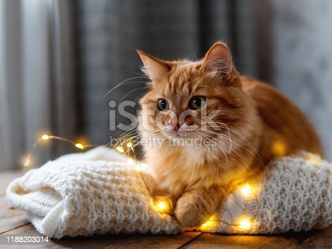 Cute ginger cat is lying on white knitted sweater. Fluffy pet on wooden table with light bulbs. Scandy style. Preparation for Christmas and New Year celebration.