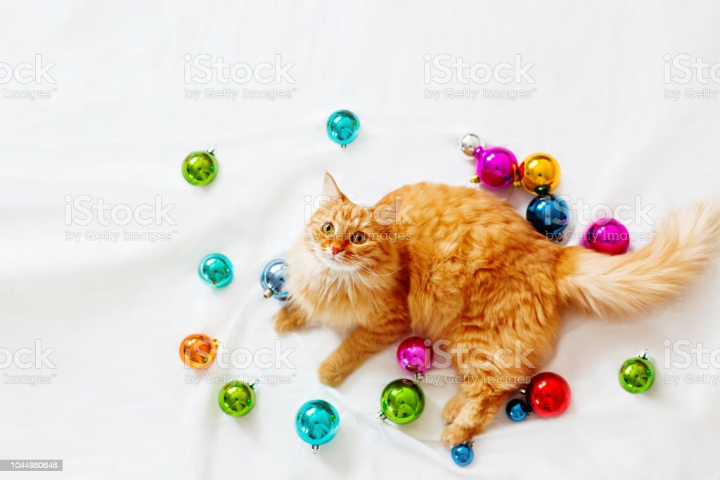 Cute ginger cat lies among Christmas decorations - bright colorful balls. The fluffy pet comfortably settled to play. Cozy holiday background, morning bedtime at home. Flat lay, top view. stock photo