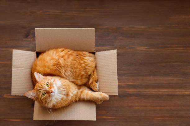 Cute ginger cat lies in carton box on wooden background. Fluffy pet with green eyes is staring in camera. Top view, flat lay. stock photo