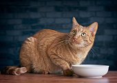 Cute ginger cat looking up and waiting for food.