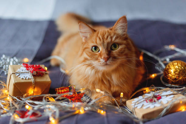 Cute ginger cat lying in bed with shining light bulbs and New Year presents in craft paper. Cozy home Christmas holiday background. stock photo