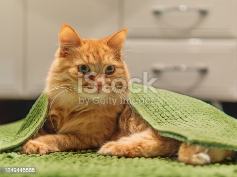 Cute ginger cat lying on bathroom floor, covered with green rug. Fluffy funny pet basked in warm room.