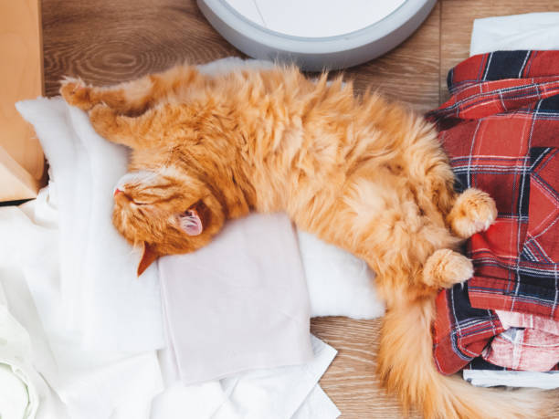 Cute ginger cat lying on clothes. Mess in room, outfits and Robot vacuum cleaner lying in disorder on the floor. stock photo