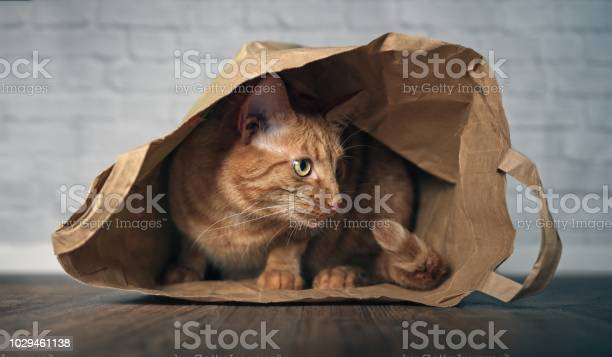 Cute ginger cat sitting in a paper bag and looking curious sideways picture id1029461138?b=1&k=6&m=1029461138&s=612x612&h=dtbm4qfbnskdnx1dzr4x2i vewft64reb1mkfncdbrw=