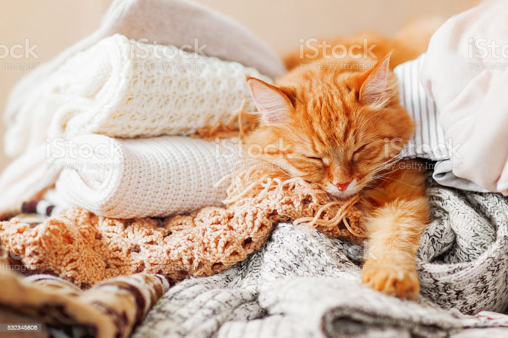Cute ginger cat sleeps on a pile of knitted clothes. stock photo