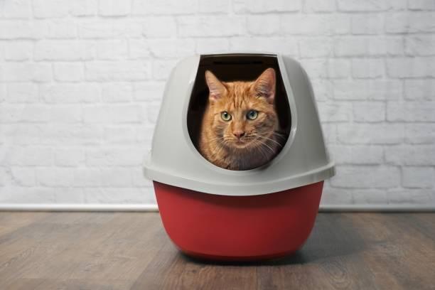 Cute ginger cat using a red closed litter box picture id1004401474?b=1&k=6&m=1004401474&s=612x612&w=0&h=0e f ffge9xo6dgvvqojco2kboqfxecqx14xntcimka=