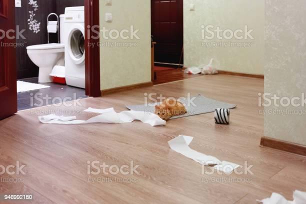 Cute ginger cat was playing with toilet paper fluffy pet looking and picture id946992180?b=1&k=6&m=946992180&s=612x612&h=vhdb3 mpzfhxovmygrwsgbrxmyexkzq b9uzvvslfsg=