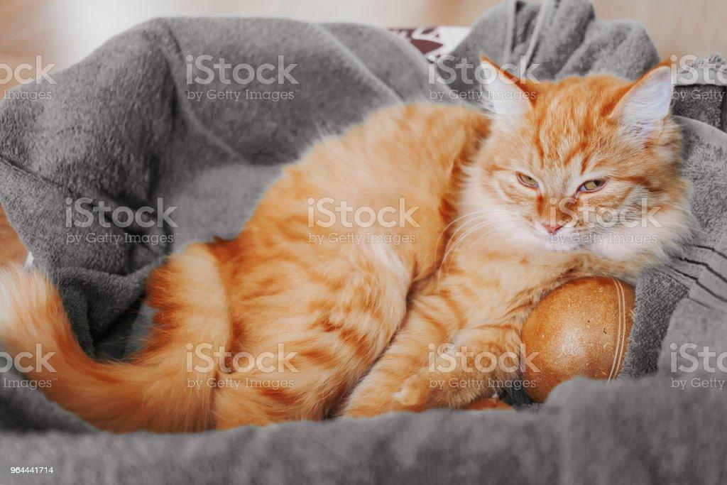 Lindo gatinho gengibre cochilando em sua cama com brinquedo balll. Animal de estimação fofo tem um cochilo abraçando o brinquedo favorito. - Foto de stock de Abraçando royalty-free