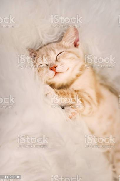 Cute ginger kitten is sleeping and smiling on a fur blanket concept picture id1144982181?b=1&k=6&m=1144982181&s=612x612&h=k7isxhefxokpb5t1iabzio9h5iwgfxvmf32zoq64h28=