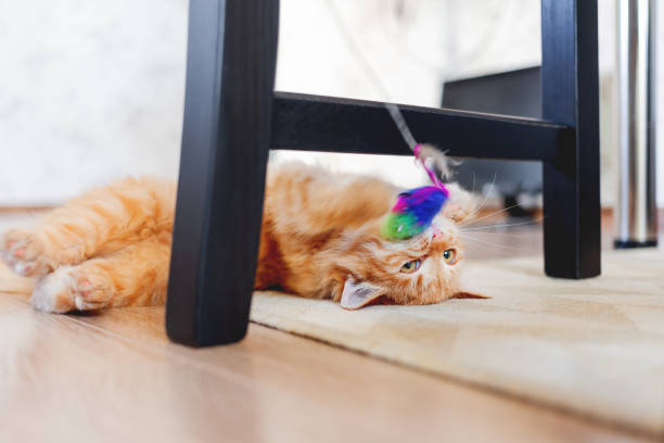 Cute ginger kitten plays with toy mouse on rope. Fluffy pet lies on carpet under black wooden chair. Domestic playful animal in cozy home. stock photo