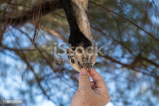 Cute girl hanging on a tree branch and takes a nut from a mans hand.