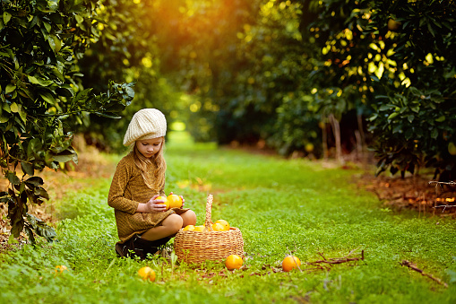 Cute girl in the garden collects tangerines