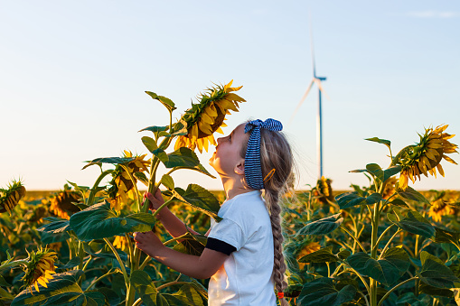 Cute girl in white t-shirt smelling sunflower in the field on the sunset. Child with long blonde braided hair on countryside landscape with yellow flower in hand. Farming concept,harvesting wallpaper.