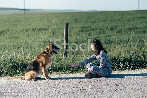 Cute Girl Playing With Her Dog Against The Background Of The Field Stock Photo & More Pictures of Animal